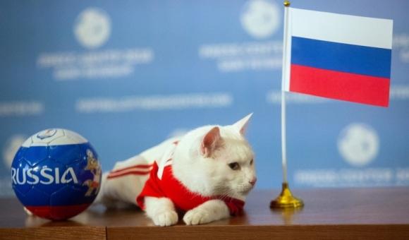 ნახეთ როგორ იწინასწარმეტყველა კატამ რუსეთის ჩემპიონობა