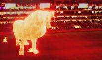 საოცარი სანახაობა! - არგენტინაში სტადიონზე უზარმაზარი ლომი გაჩნდა [VIDEO]